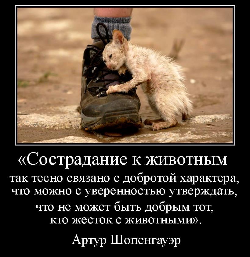 photo 525051_10200316551250566_2004776639_n.jpg